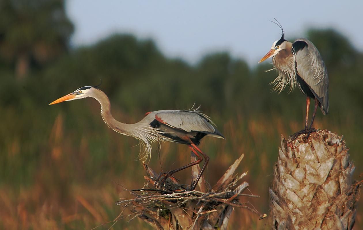 Blue Heron Wetlands, Titusville.  Jan. 2006