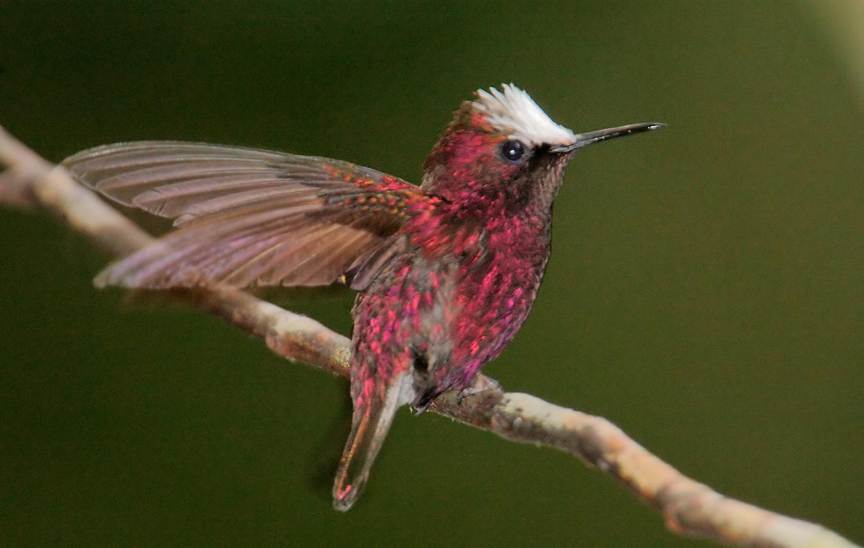 Hummingbird Feeders  Above Rancho Naturalista, Costa Rica, 2007-3.