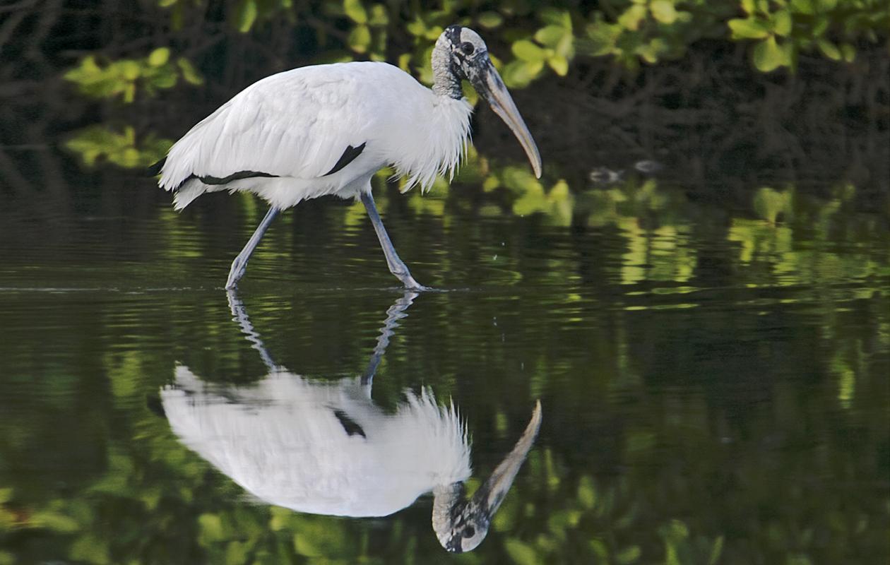 Little Estero Lagoon, Fort Myers Beach, November 2008